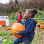 J&J Produce Pick Your Own Pumpkins Bermuda, October 23 2015-65