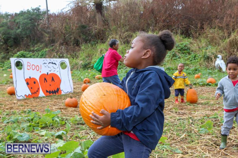 JJ-Produce-Pick-Your-Own-Pumpkins-Bermuda-October-23-2015-65