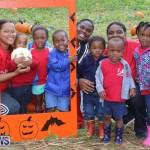 J&J Produce Pick Your Own Pumpkins Bermuda, October 23 2015-67