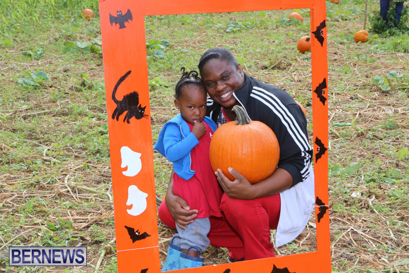 JJ-Produce-Pick-Your-Own-Pumpkins-Bermuda-October-23-2015-68