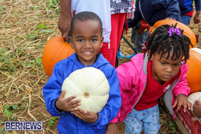 JJ-Produce-Pick-Your-Own-Pumpkins-Bermuda-October-23-2015-70