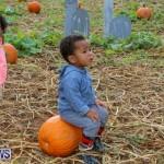 J&J Produce Pick Your Own Pumpkins Bermuda, October 23 2015-71