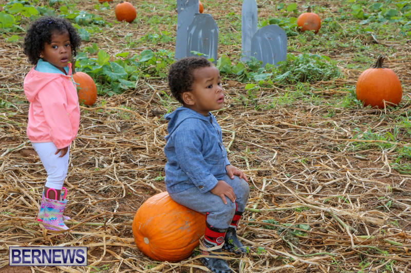 JJ-Produce-Pick-Your-Own-Pumpkins-Bermuda-October-23-2015-71
