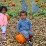 J&J Produce Pick Your Own Pumpkins Bermuda, October 23 2015-73