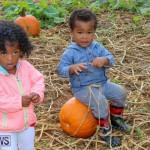 J&J Produce Pick Your Own Pumpkins Bermuda, October 23 2015-74