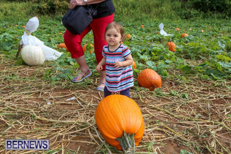 JJ-Produce-Pick-Your-Own-Pumpkins-Bermuda-October-23-2015-75
