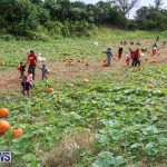 J&J Produce Pick Your Own Pumpkins Bermuda, October 23 2015-79
