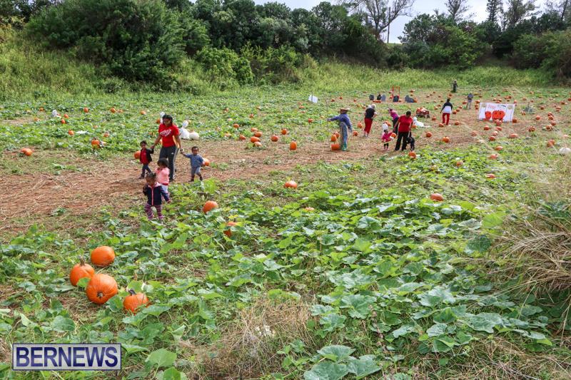 JJ-Produce-Pick-Your-Own-Pumpkins-Bermuda-October-23-2015-79