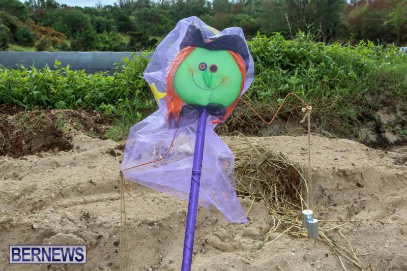 JJ-Produce-Pick-Your-Own-Pumpkins-Bermuda-October-23-2015-82