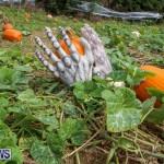 J&J Produce Pick Your Own Pumpkins Bermuda, October 23 2015-9