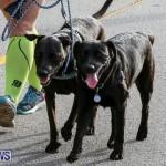 PartnerRe Womens 5K Run Bermuda, October 11 2015-91