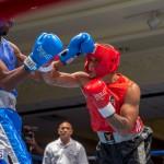 Bermuda Boxing JM Nov 2015 (2)