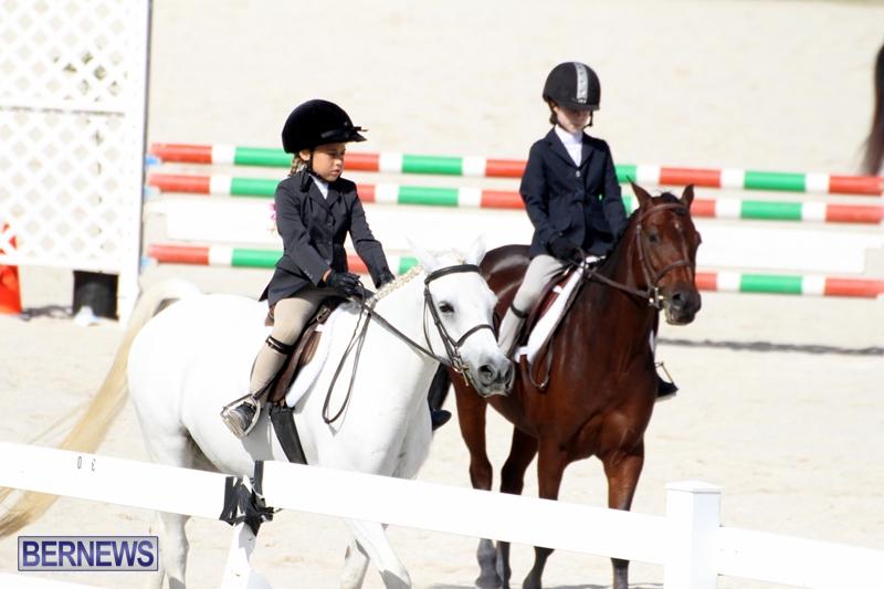 Bermuda-Equestrian-Nov-11-2015-1