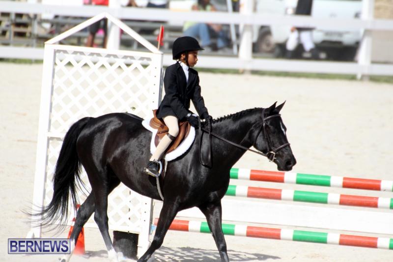 Bermuda-Equestrian-Nov-11-2015-11