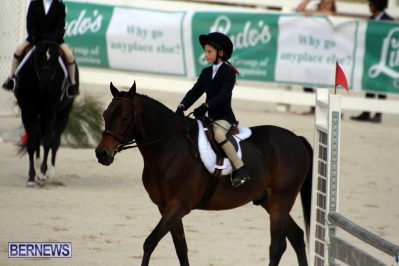 Bermuda-Equestrian-Nov-11-2015-12