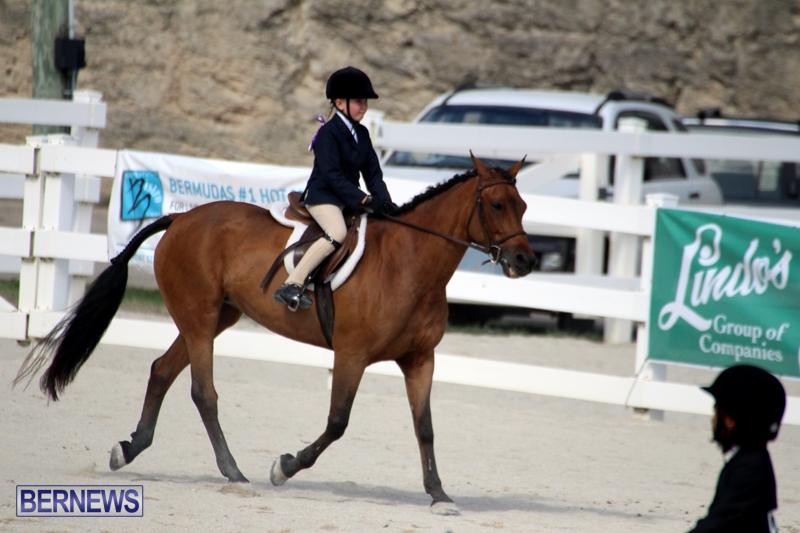 Bermuda-Equestrian-Nov-11-2015-18
