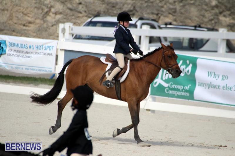 Bermuda-Equestrian-Nov-11-2015-19