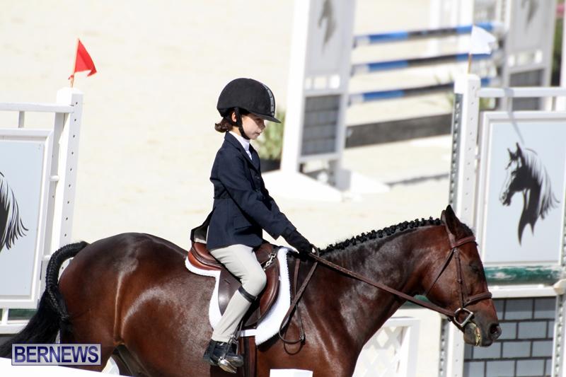 Bermuda-Equestrian-Nov-11-2015-2