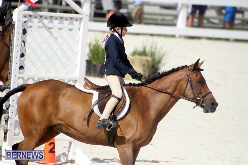 Bermuda-Equestrian-Nov-11-2015-3