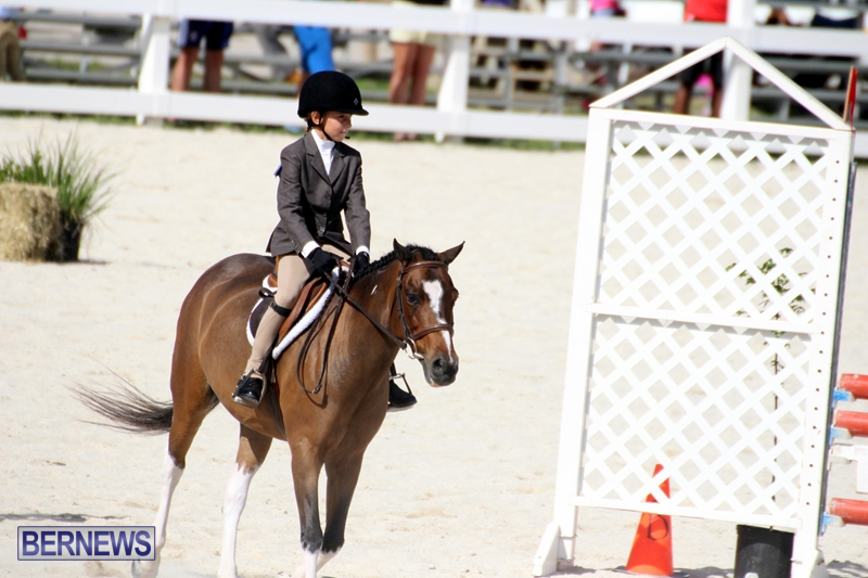 Bermuda-Equestrian-Nov-11-2015-4