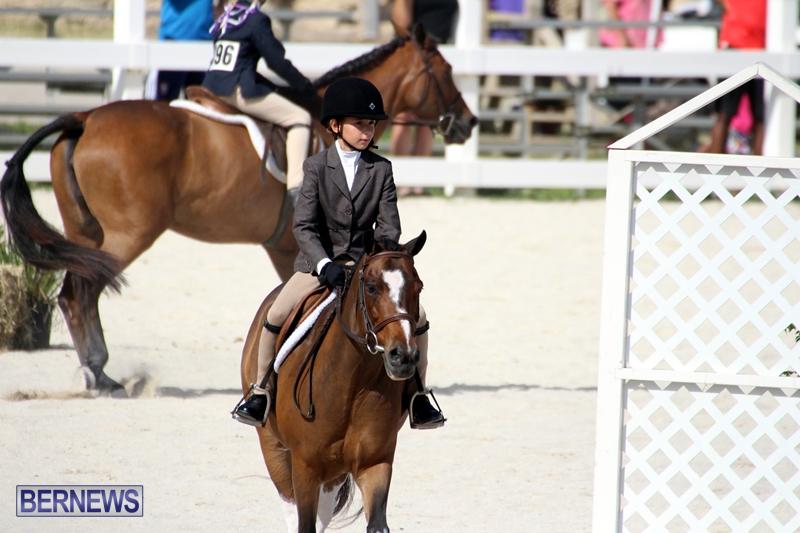 Bermuda-Equestrian-Nov-11-2015-5
