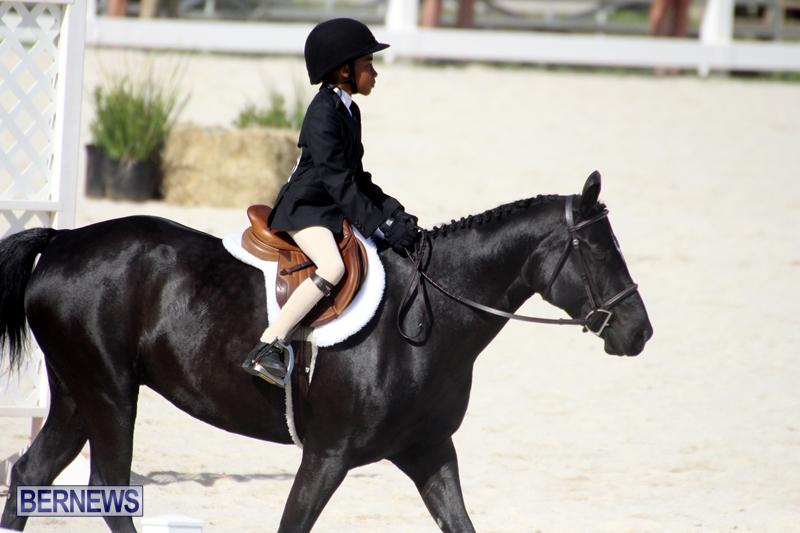 Bermuda-Equestrian-Nov-11-2015-6