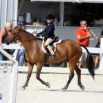 Bermuda Equestrian Nov 11 2015 (7)