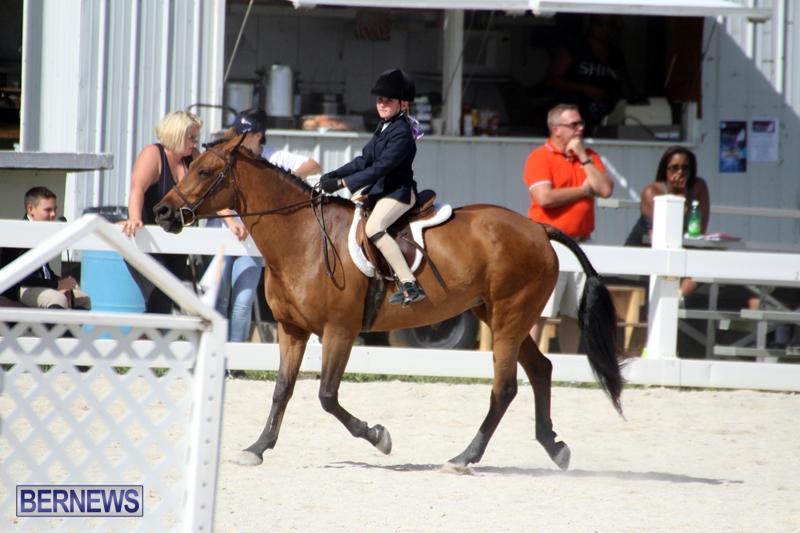 Bermuda-Equestrian-Nov-11-2015-7