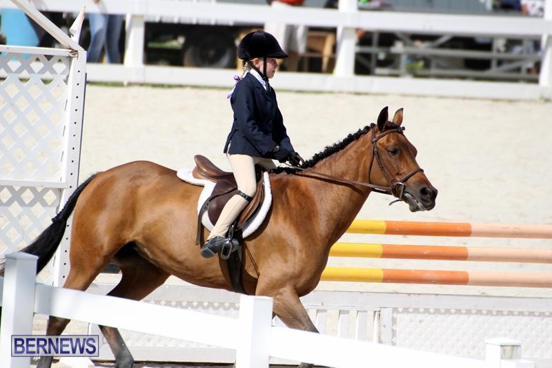 Bermuda-Equestrian-Nov-11-2015-9