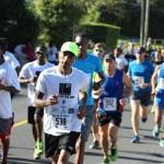 Bermuda Running Nov 11 2015 (6)