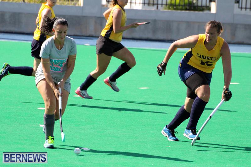 Budgies-Canaries-Hockey-Bermuda-November-2015-11