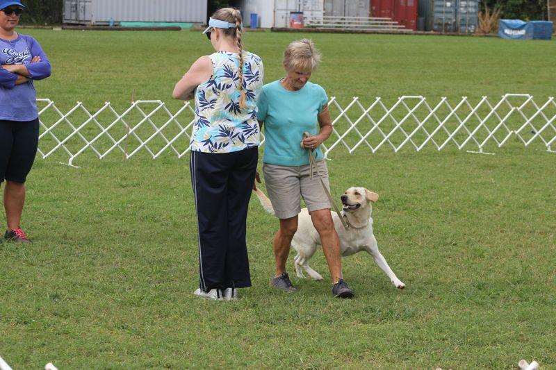 Dog Training Club Bermuda Nov 18 2015 2 (3)