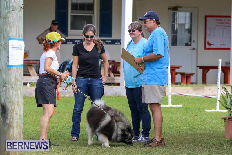 Dogs-Agility-Bermuda-November-7-2015-15