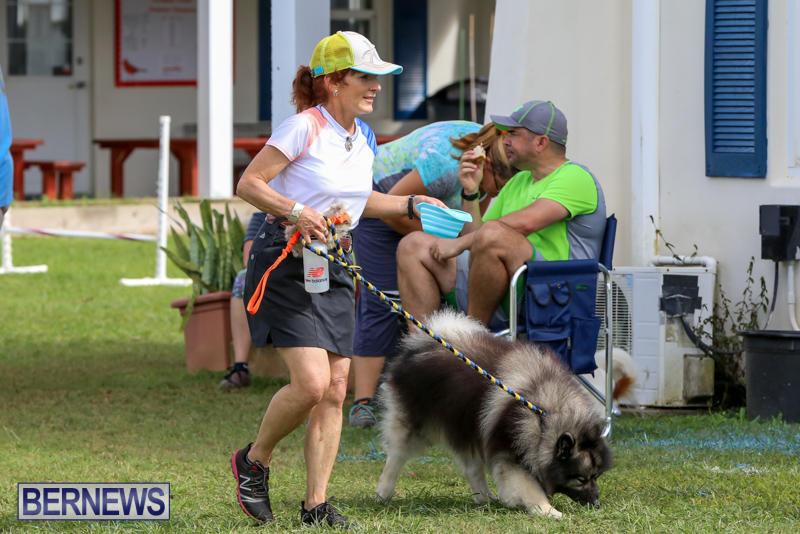 Dogs-Agility-Bermuda-November-7-2015-16