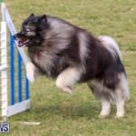 Dogs Agility Bermuda, November 7 2015-38