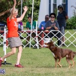 Dogs Agility Bermuda, November 7 2015-57