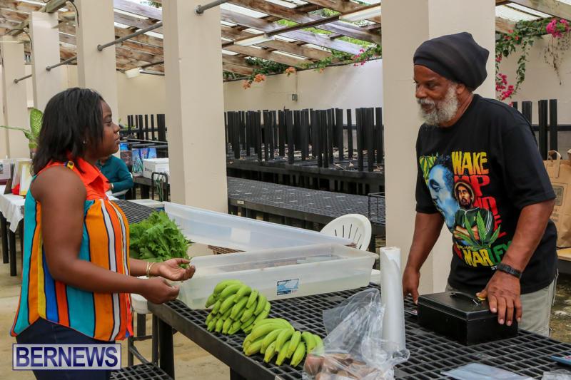 Farmers-Market-Bermuda-November-28-2015-40