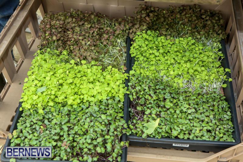 Farmers-Market-Bermuda-November-28-2015-45