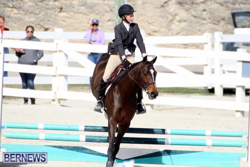 Horse-Show-Bermuda-Nov-26-2015-13