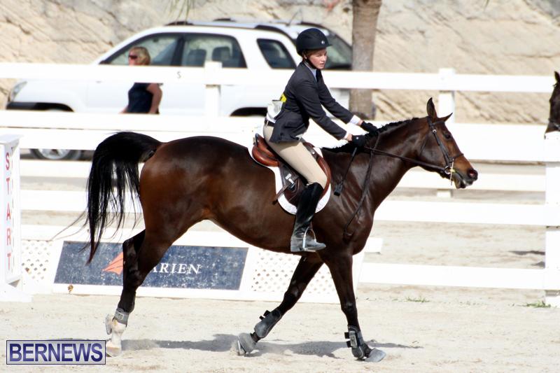Horse-Show-Bermuda-Nov-26-2015-14