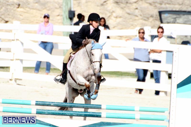 Horse-Show-Bermuda-Nov-26-2015-16