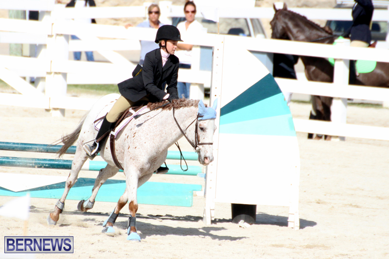 Horse-Show-Bermuda-Nov-26-2015-17