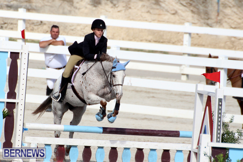 Horse-Show-Bermuda-Nov-26-2015-18