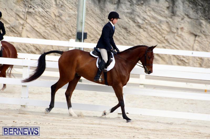 Horse-Show-Bermuda-Nov-26-2015-3