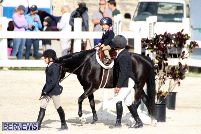 Horse-Show-Bermuda-Nov-26-2015-5