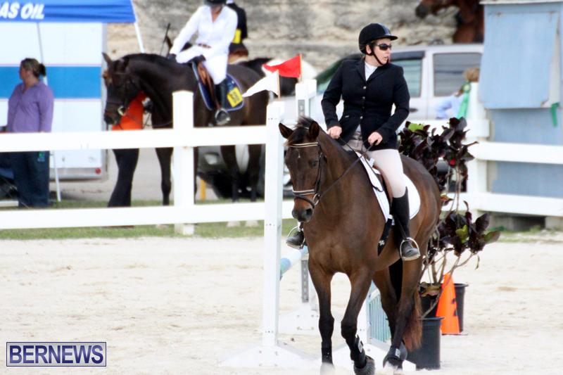 Horse-Show-Bermuda-Nov-26-2015-6