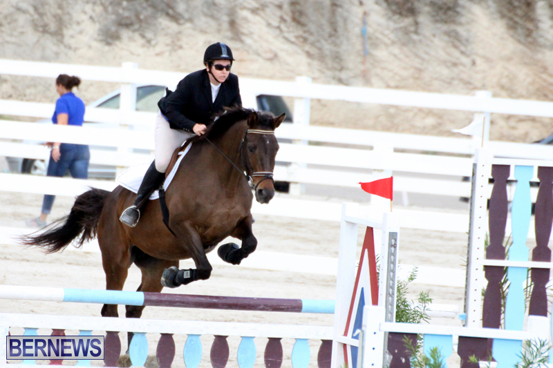 Horse-Show-Bermuda-Nov-26-2015-9