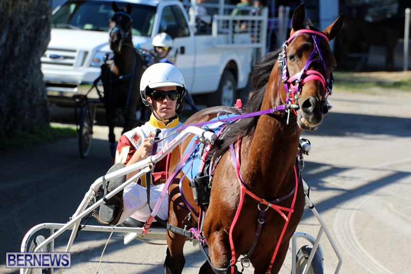 Bermuda-Harness-Pony-Racing-Dec-2015-1