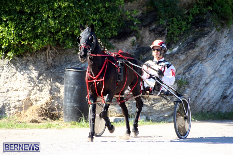 Bermuda-Harness-Pony-Racing-Dec-2015-12