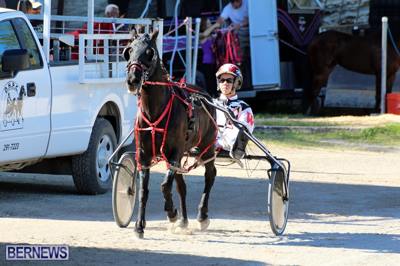 Bermuda-Harness-Pony-Racing-Dec-2015-13
